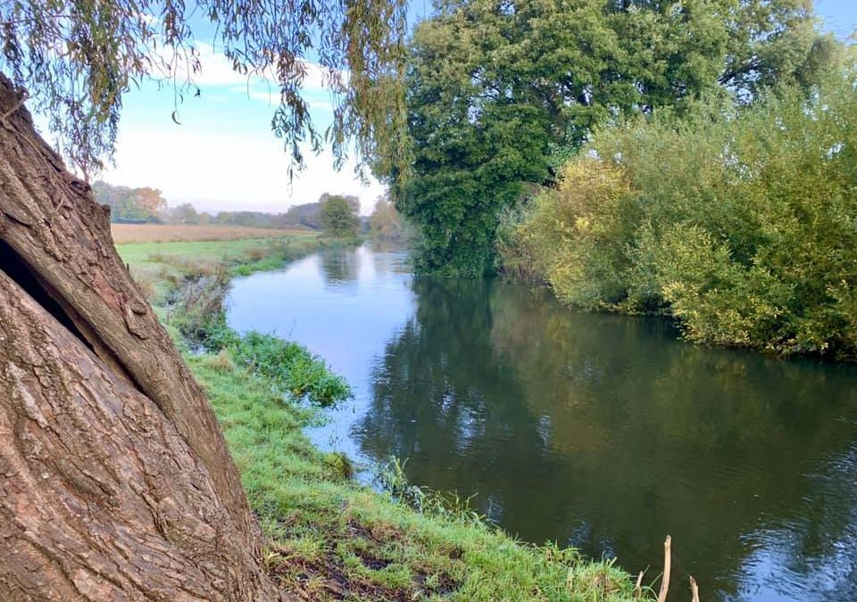 Sopley Mill Stream