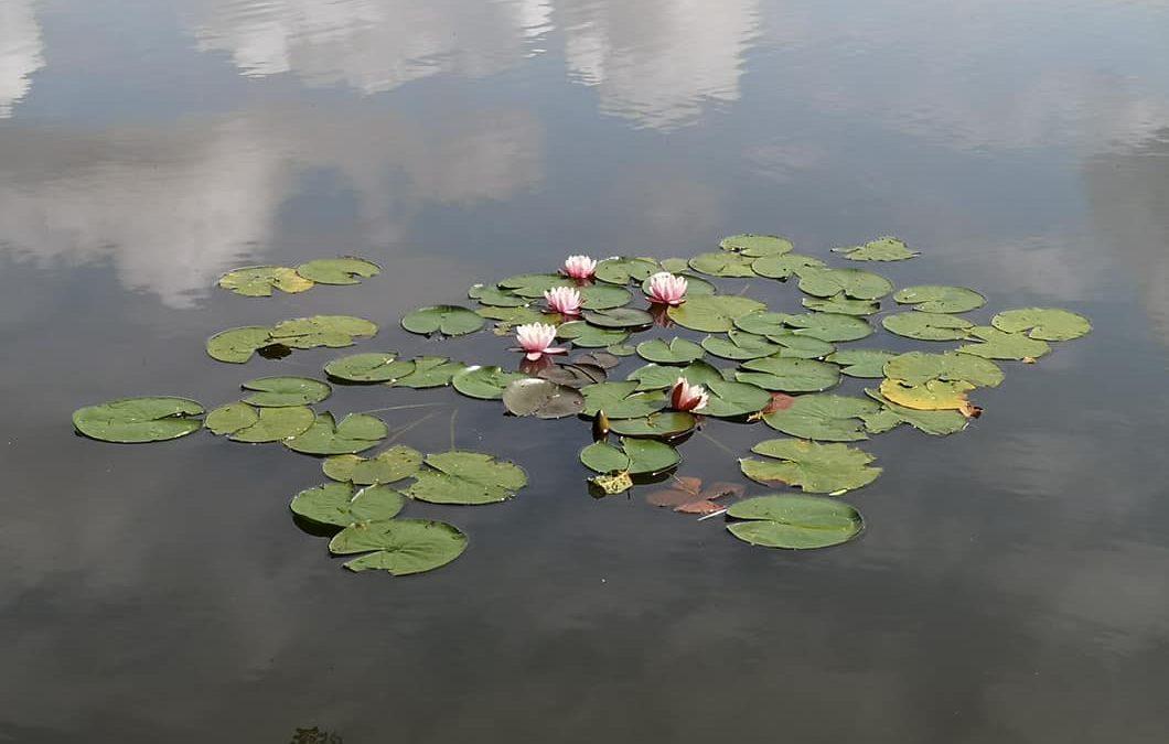 Wainsford Lake